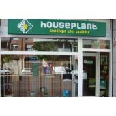 House Plant Lleida en Lérida