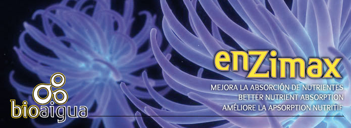 Enzimax