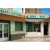 Cannacarthago en Cartegena